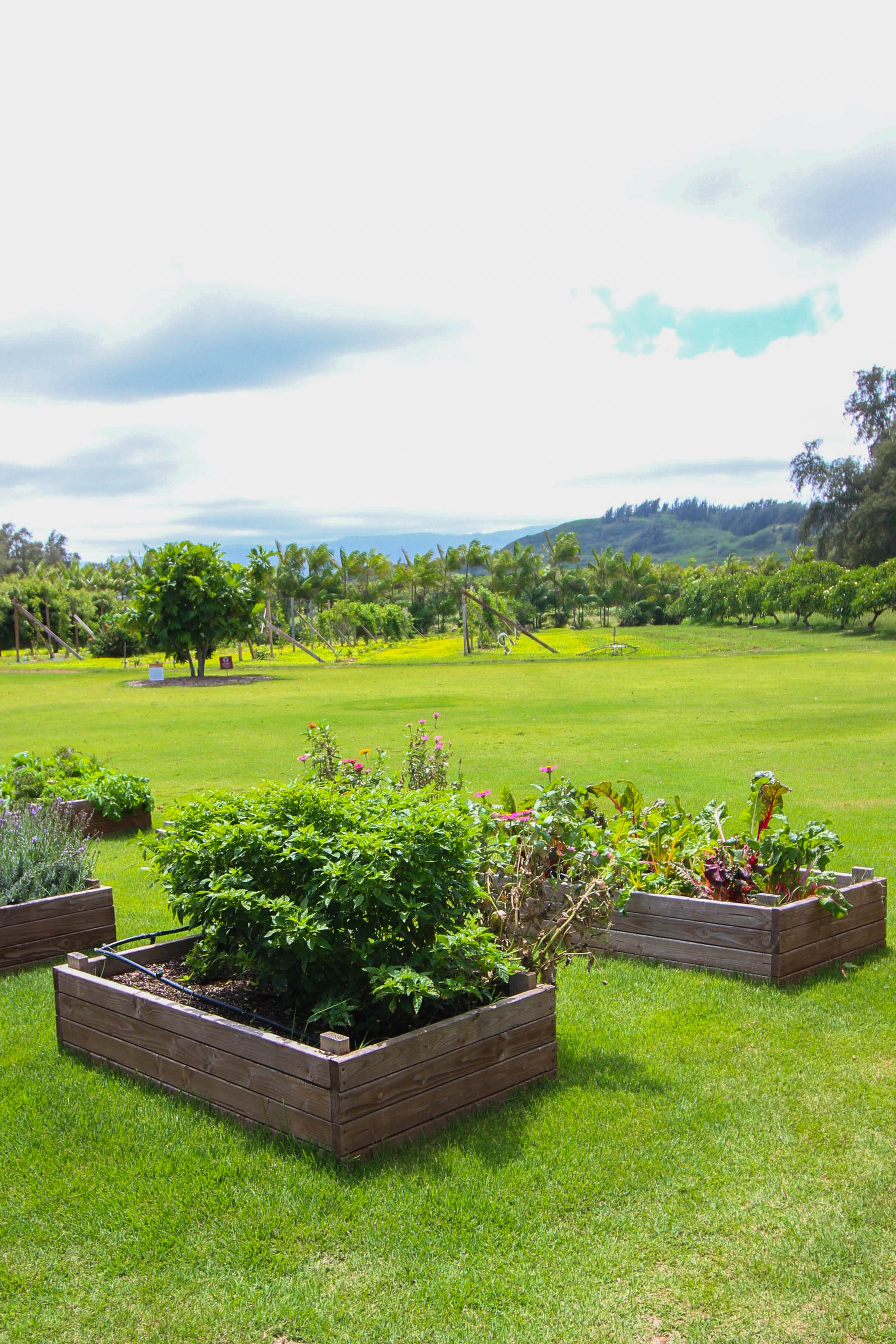 Top Foodie Experiences on Oahu Hawaii, Kahuku Farms North Shore